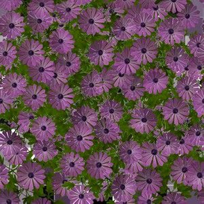 Purple Aster Floral