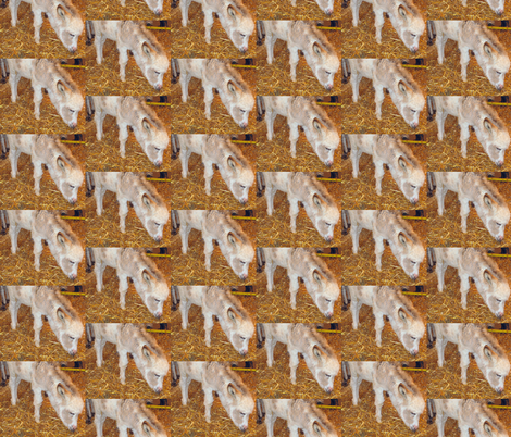 Burro fabric by jacneed on Spoonflower - custom fabric