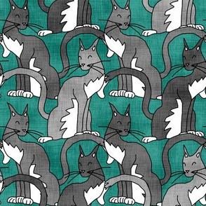 Gray Cats