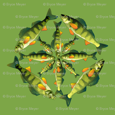 Yellow Perch 4x4x4 pattern