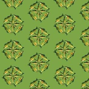 Yellow Perch 4x4x4 pattern