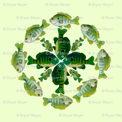 8 x 4 x 4 Sunfish pattern