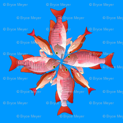 Red and Vermilion Snapper 4 by 4