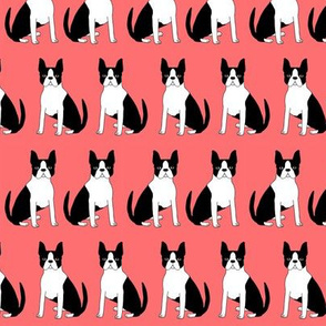 boston terrier dog dogs puppy pet dogs fabric coral dog black and white