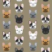 Rrfrench_bulldog_khaki_shop_thumb