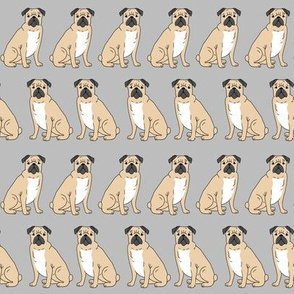 pug pet pug grey cute dogs pet dog puppy pugs