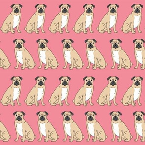 pug pugs cute dog pet dog dogs puppy pugs pink girls nursery sweet dog