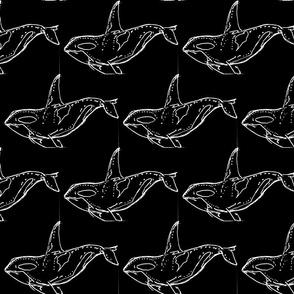 Orca White on Black