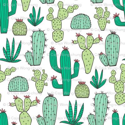 Cactus on White