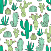 Cactus on White