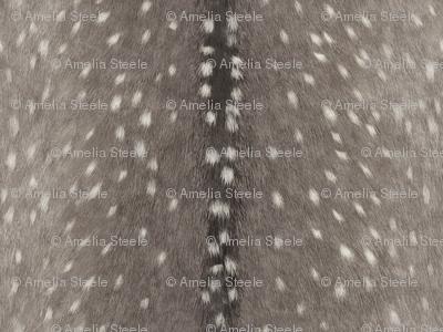 Deer Hide // Cashmere