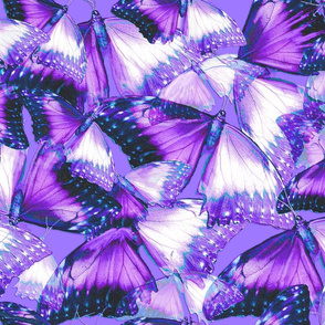 Butterflies Purple