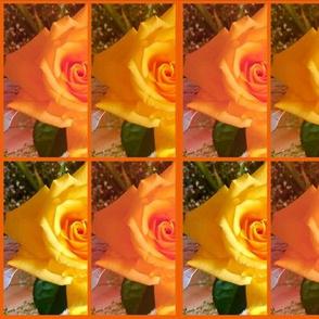 rose garden of carlsbad