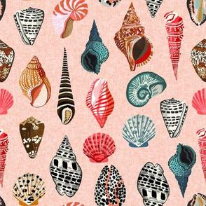 shells // seashell shell pastel pink blush linen beach ocean summer nautical