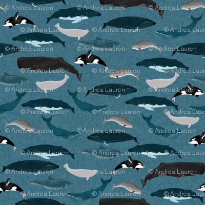 whale // whales ocean sea creature cetacean pod of whales beluga narwhal