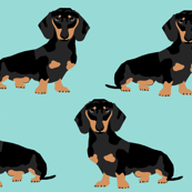 doxie dachshund wiener dog dogs pet pets