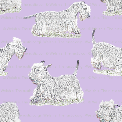Frolicking Cesky Terrier - purple