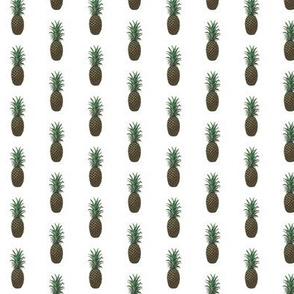 Ananas_comosus