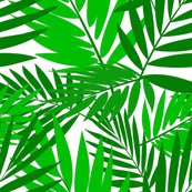 Palms_shop_thumb