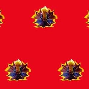 Red Tulip Polka Dot