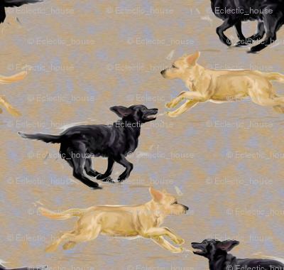Labrador Retrievers Running