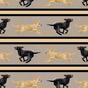 Labrador Retriever Running Stripe