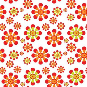 Orange and lime daisies