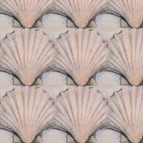Scallop shell study