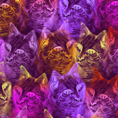 PRECIOUS GLITTER CAT Neon pink orange purple