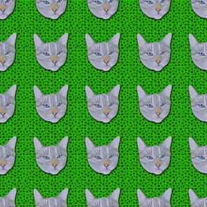 Spotty Cat Ming