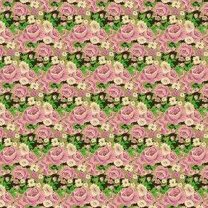 rose-5