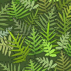 Laua'e Ferns on Olive