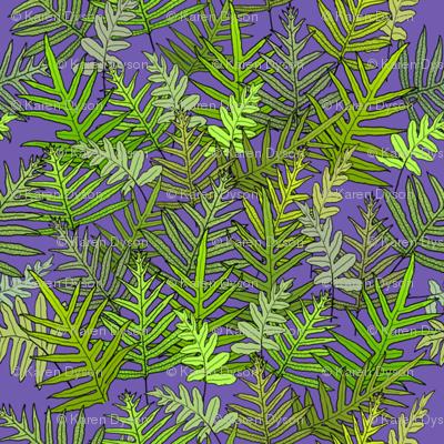 Laua'e Ferns on Purple 150