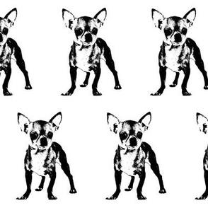 """2.5"""" Chihuahuas"""
