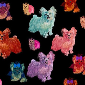 Yorkie Rainbows