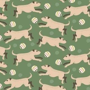 Dogs stafford
