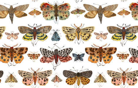 Lepidoptera fabric by gollybard on Spoonflower - custom fabric