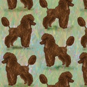 Brown Poodle on Pastels