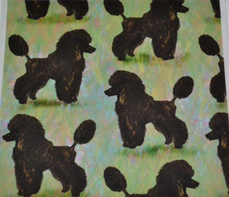 Dark Brown Poodle on Pastels