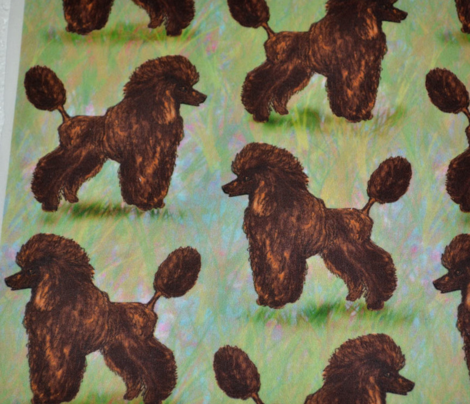Chocolate Brown Poodle on Pastels