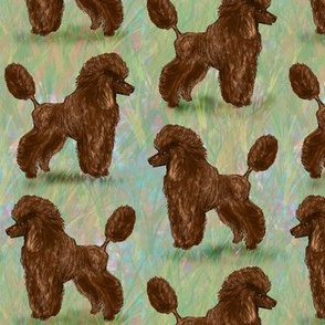 Chocolate Brown Poodle on Pastels