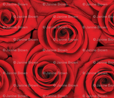 Roses are Red
