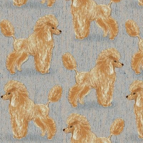 Custom Apricot Poodle with Blue Beige
