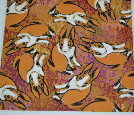 Brown Dutch Bunny Rabbits