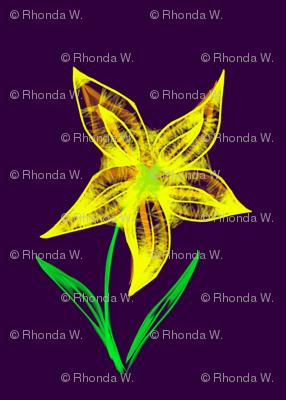 Sunny Starflower