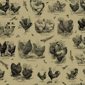 Poultry Envy Tan Black Toile B4a87d