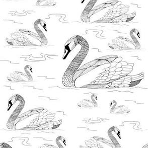 Swans BW