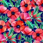 Plenty of Poppies - Watercolor on Navy