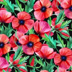 Plenty of Poppies - Watercolor on Black