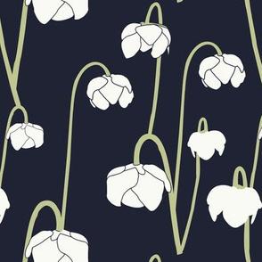 pitcher_plant
